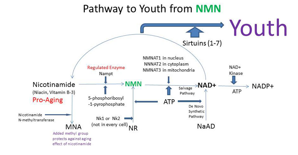 Ppathways To Youth From NMN